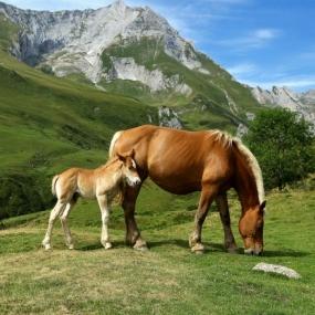 Конные прогулки-Чайный домик